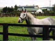 horse018